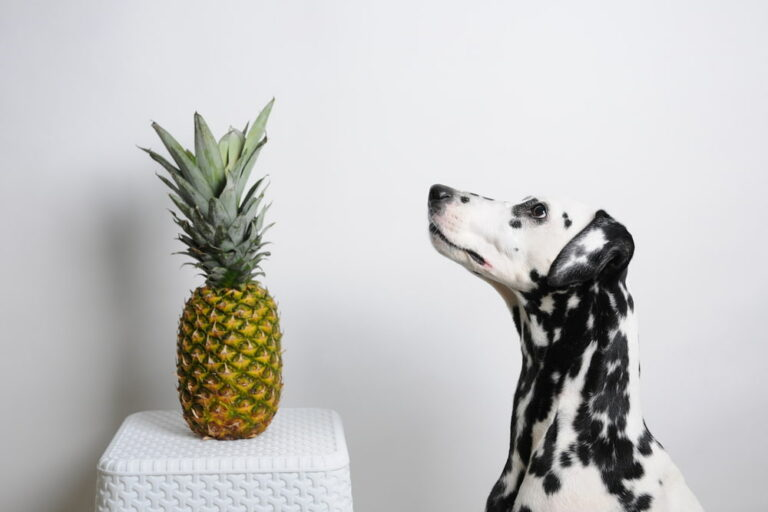 Dog looking at pineapple