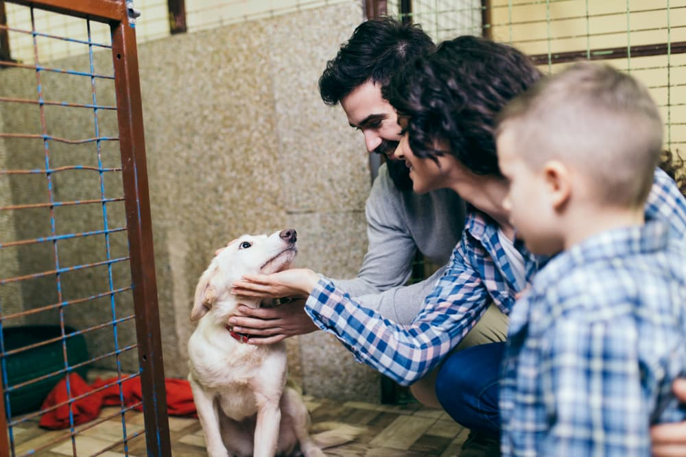 family looking at shelter dog