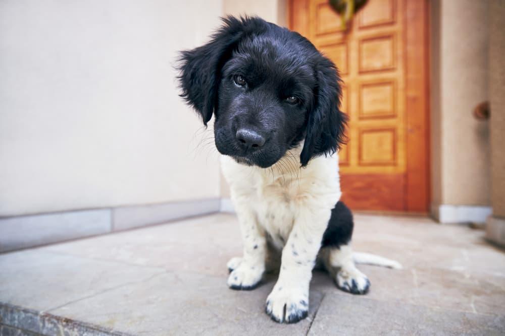 dog at front door
