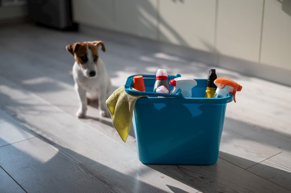 puppy near cleaning supplies