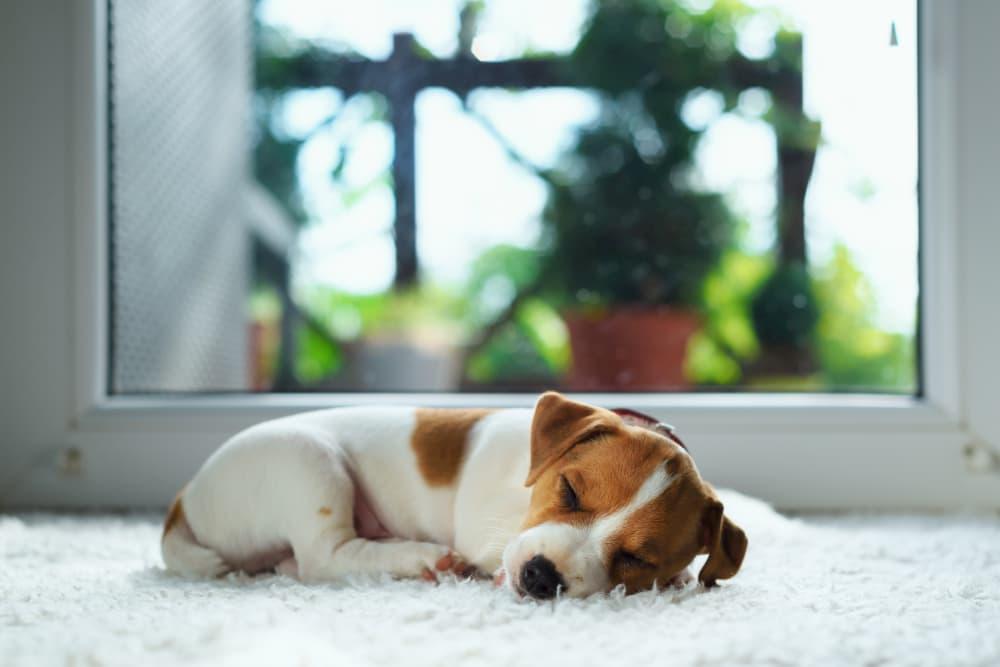 Hoe maak je je huis puppyproof