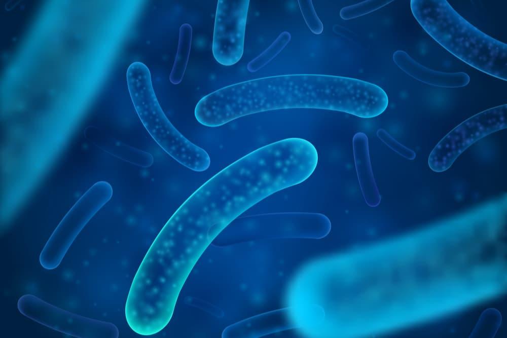 Probiotic bacteria