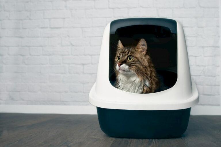 Cat in a dog-proof litter box