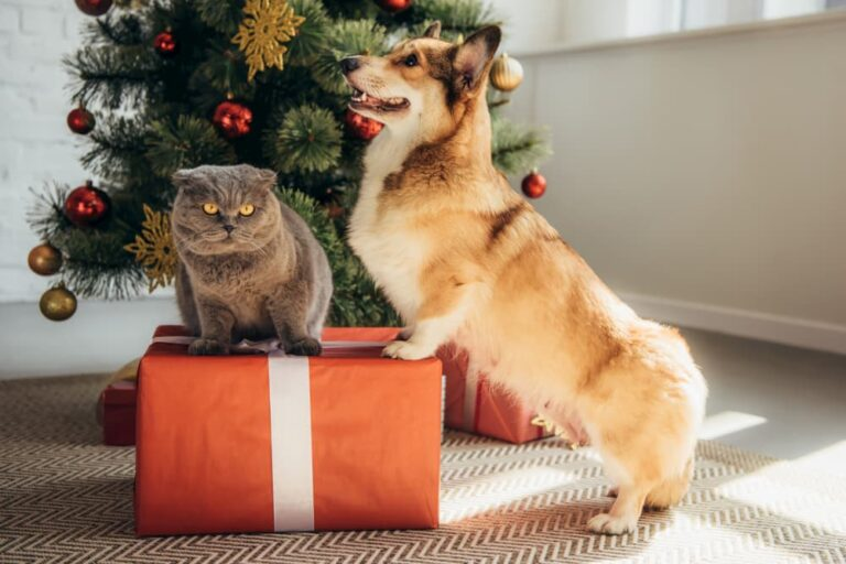 Cat and dog standing on present