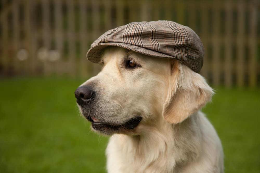 100+ Old Man Names for Dogs