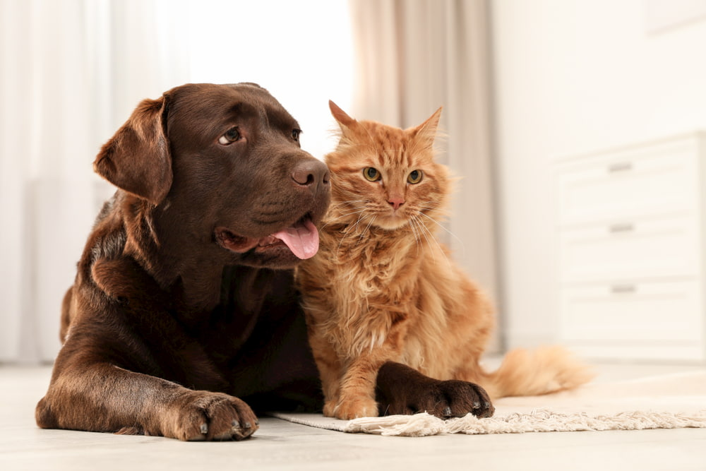Dog and cat sitting together on floor