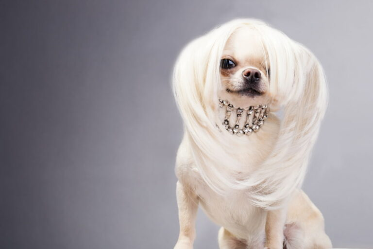Glamorous dog with sparkly collar