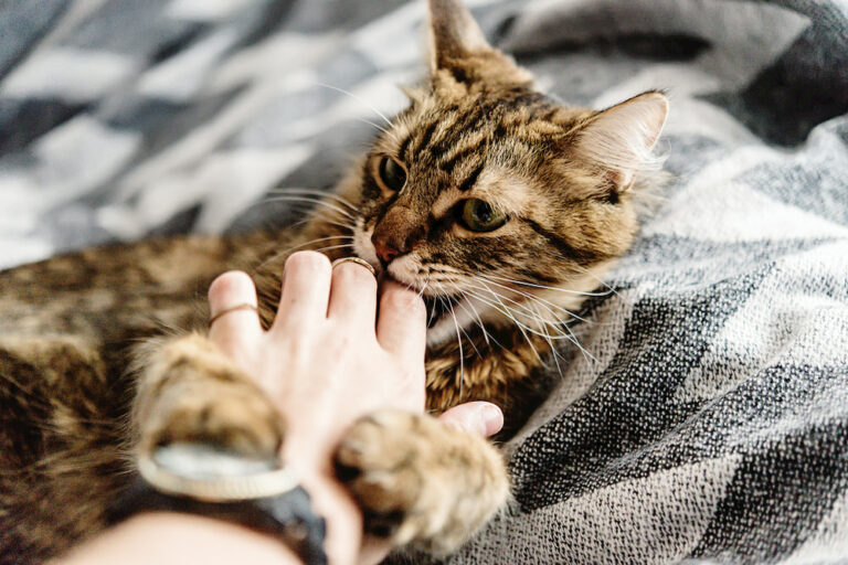 Cat biting person on hand