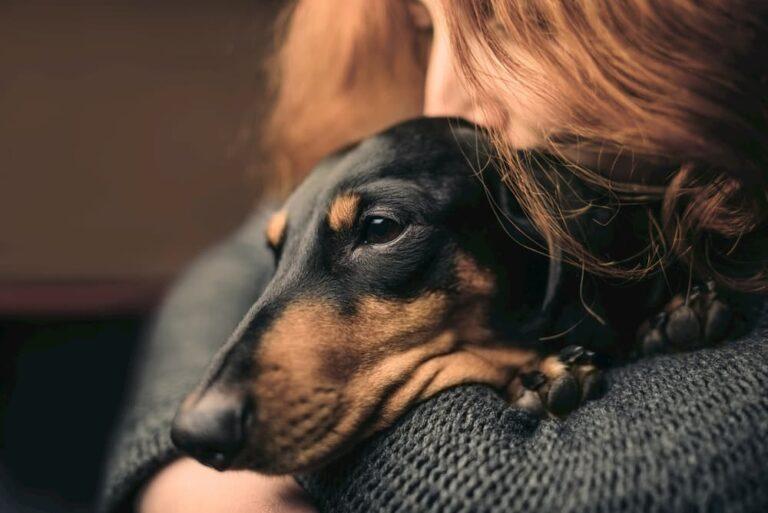 owner hugs dog