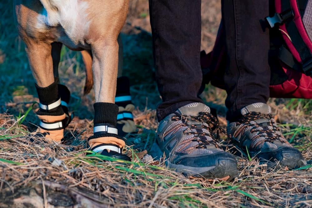 Dog wearing boots hiking