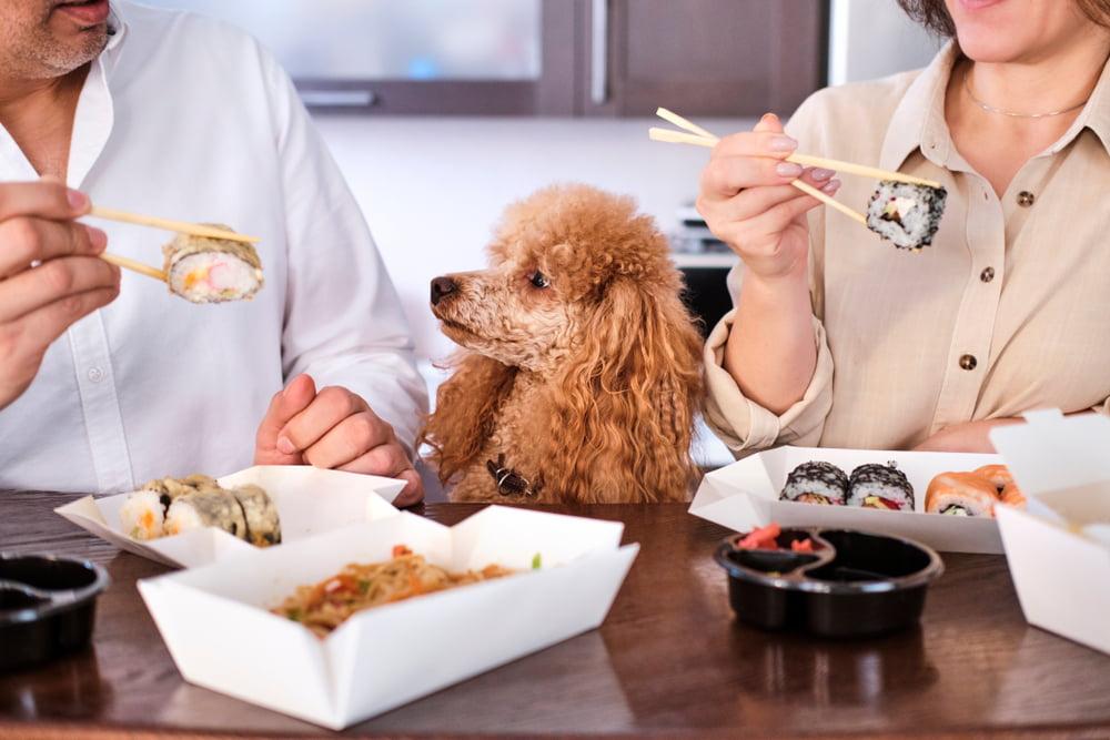 Couple eating Sushi with dog