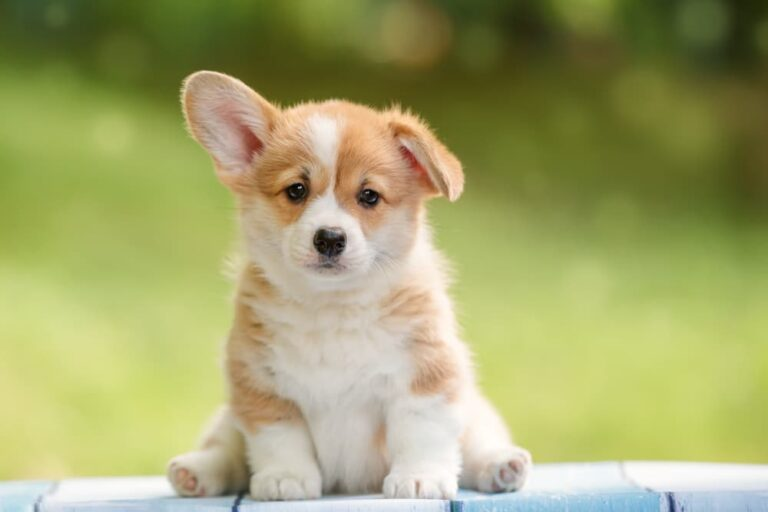 Cute puppy sitting outside