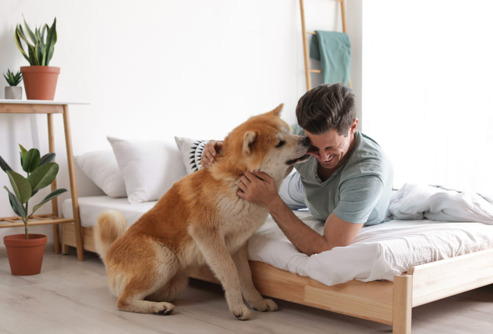 Man and dog with houseplants in bedroom