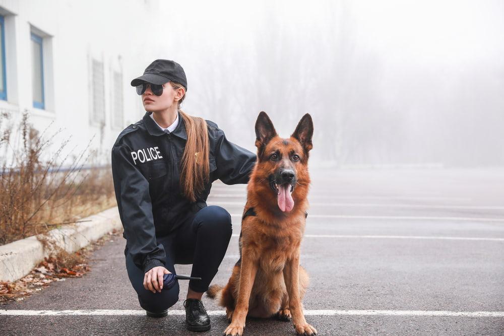 6 Police Dog Breeds That Help Law Enforcement