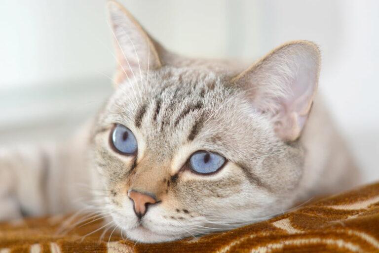 Cat with kidney disease