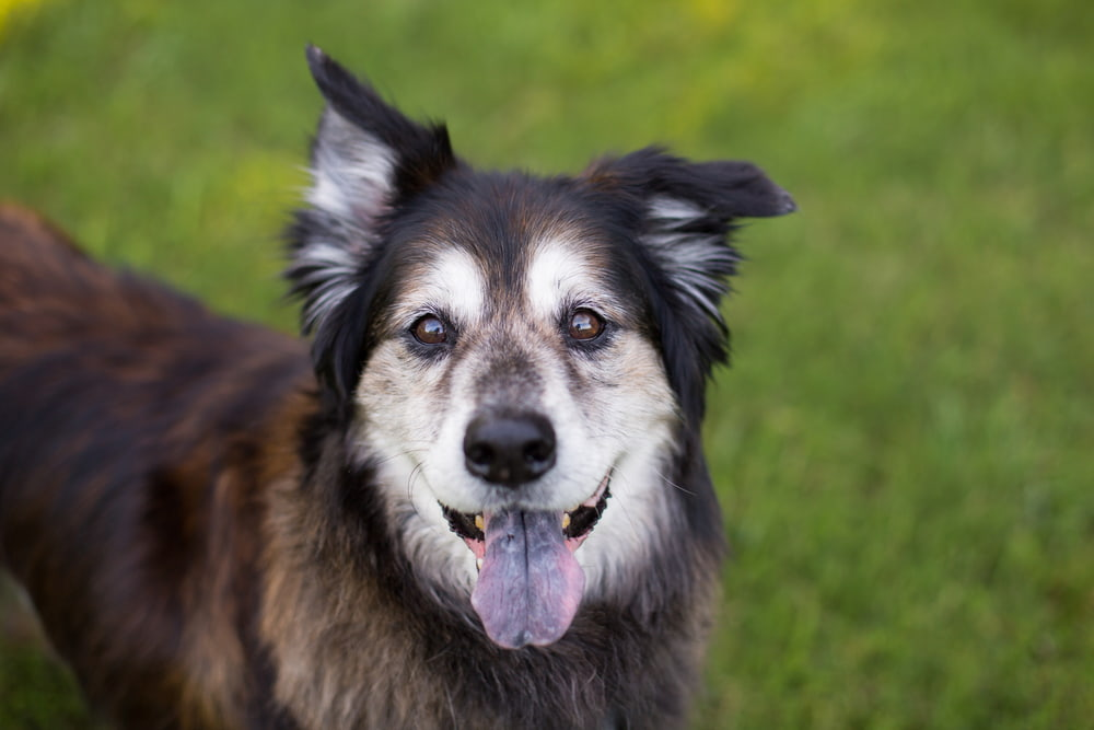 5 Dog Behavior Changes to Watch for in Aging Pets
