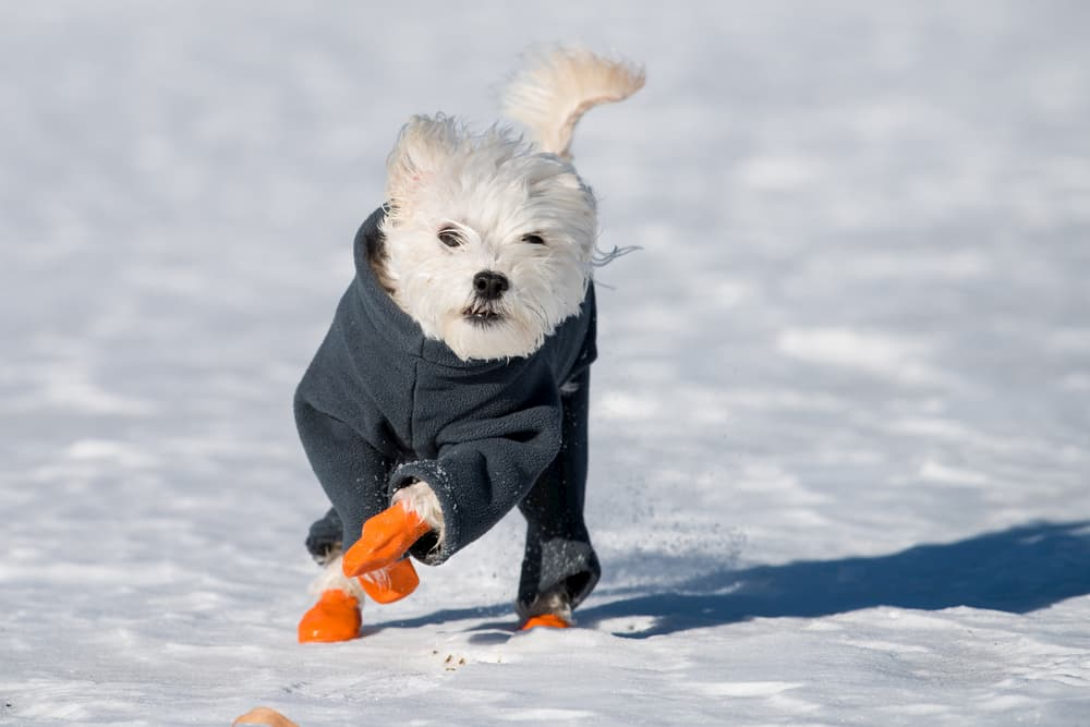 6 Best Dog Boots for Every Occasion