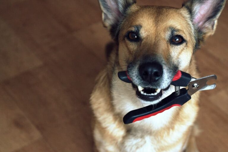 Dog holding nail clippers in mouth