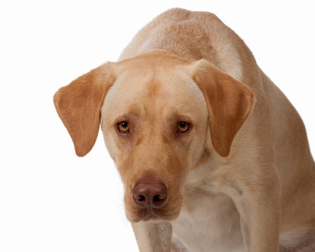 6 Sneaky Signs Your Dog is in Pain