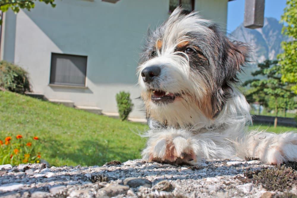 hond die buiten ontspant