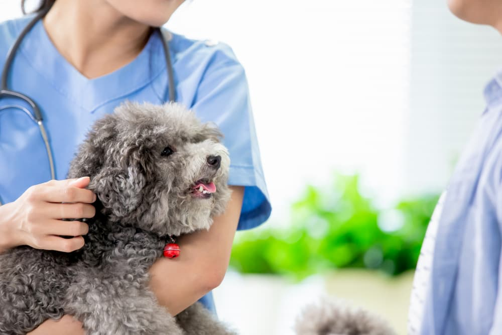 5 Barriers to Proper Pain Relief for Dogs