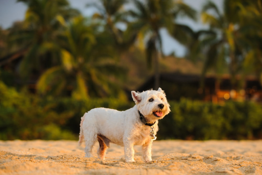 36 Hawaiian Dog Names Inspired By Island Life