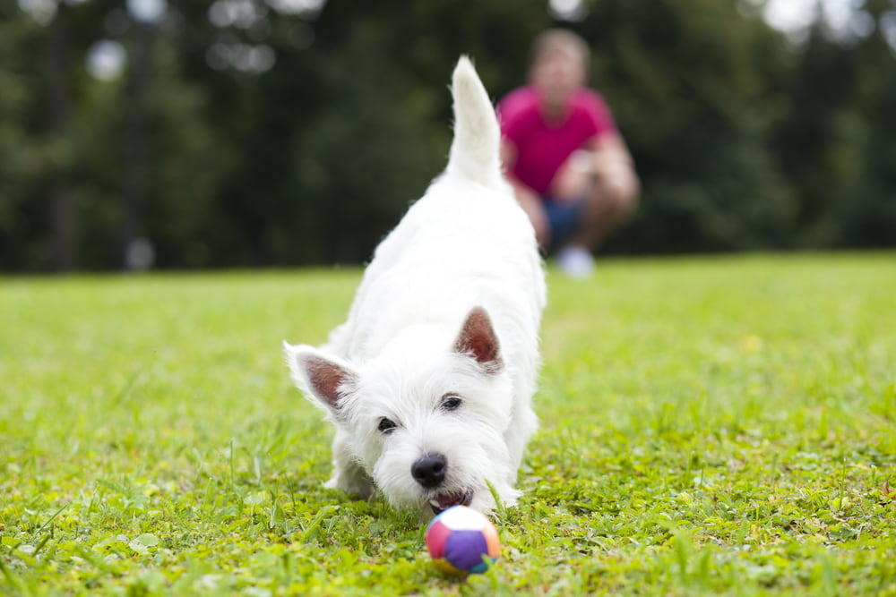 Pet-Safe Weed Killer: 5 Options to Protect Your Lawn
