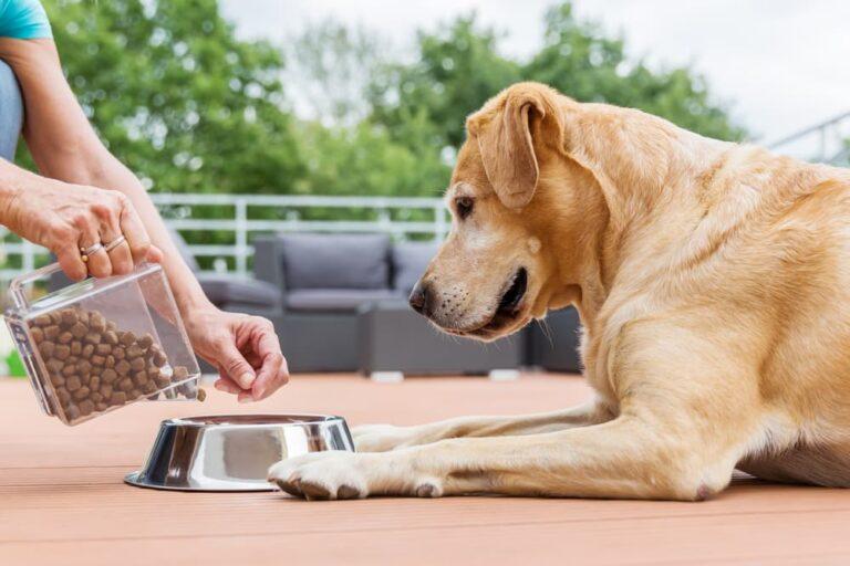 woman feeding dog food