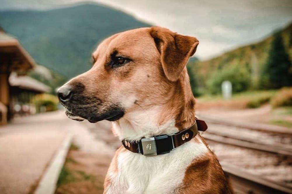FI dog gps tracker