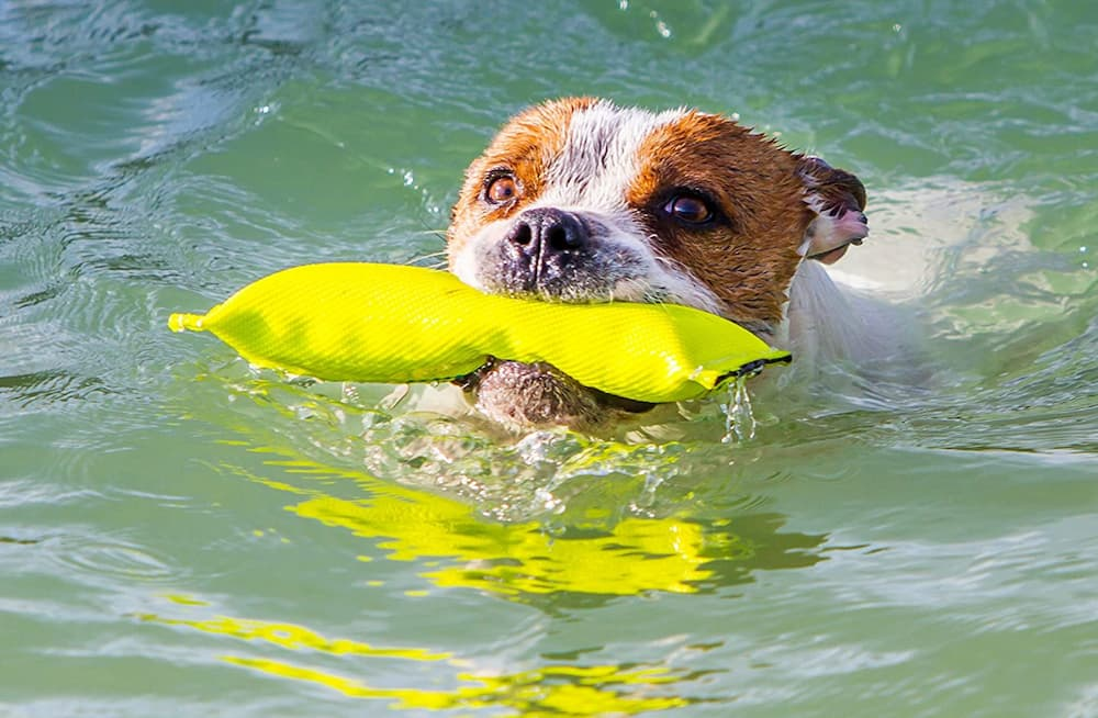 Bull Fit Floating Fetch Toy