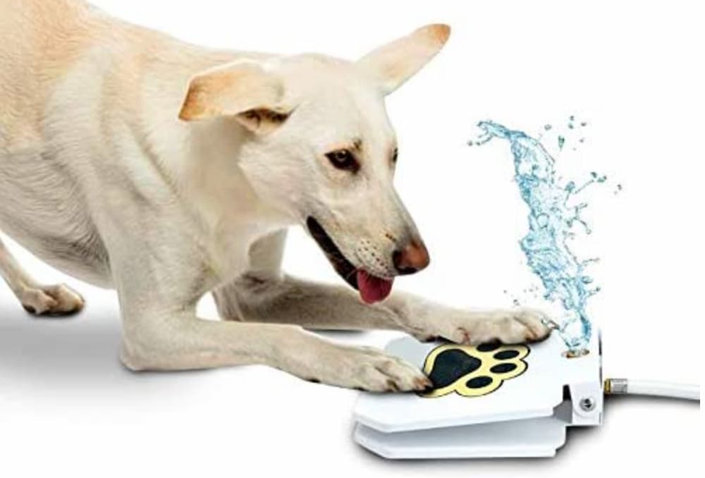 Outdoor Step-On Dog Fountain
