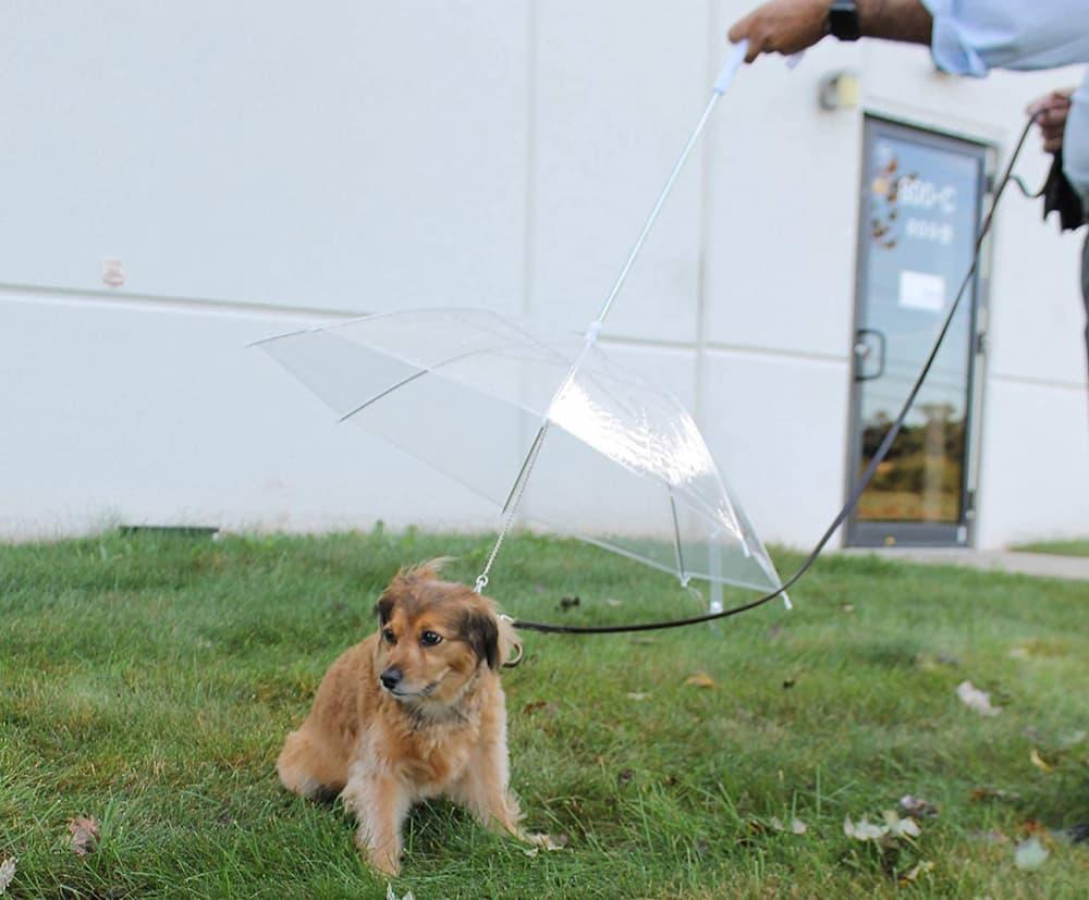Perfect Life Ideas Pet Dog Umbrella