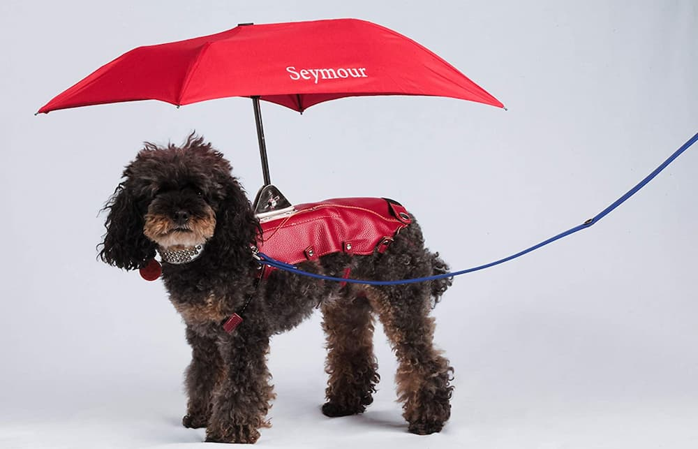 Seymour Dog Umbrella