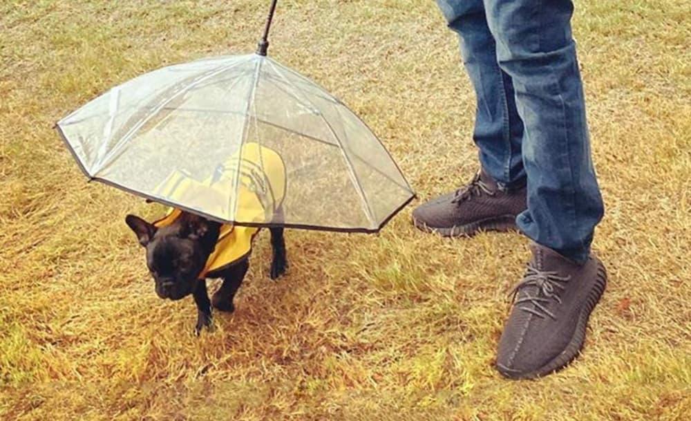 Man walking with dog umbrella