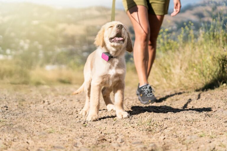 Whistle dog gps tracker