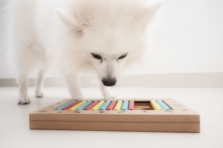 Dog playing with puzzle toy