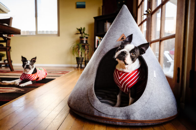 Dog in teepee bed