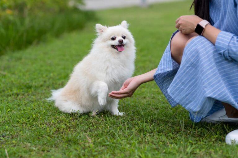 Woman giving dog calming treat