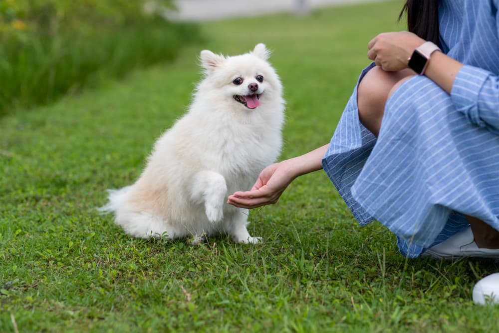 10 Best Calming Treats for Dogs in 2021