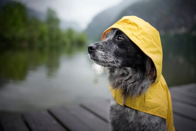 Dog in a raincoat