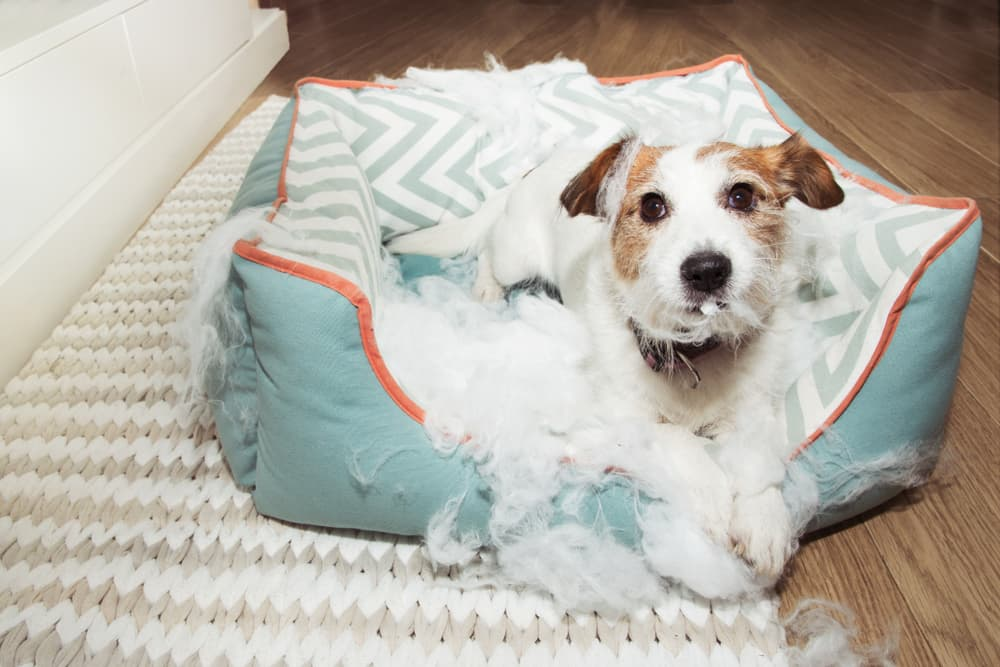 The Best Chew-Proof Dog Bed: 6 Tough Favorites to Try