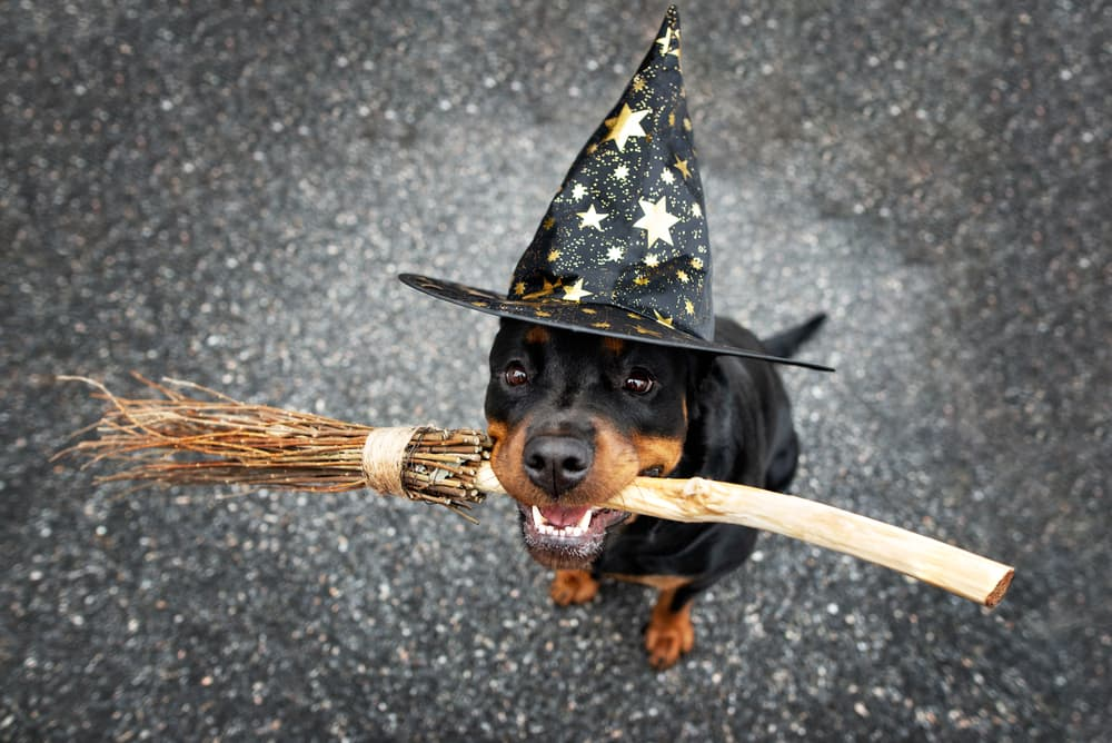 35 Harry Potter Dog Names for Your Magical Mutt