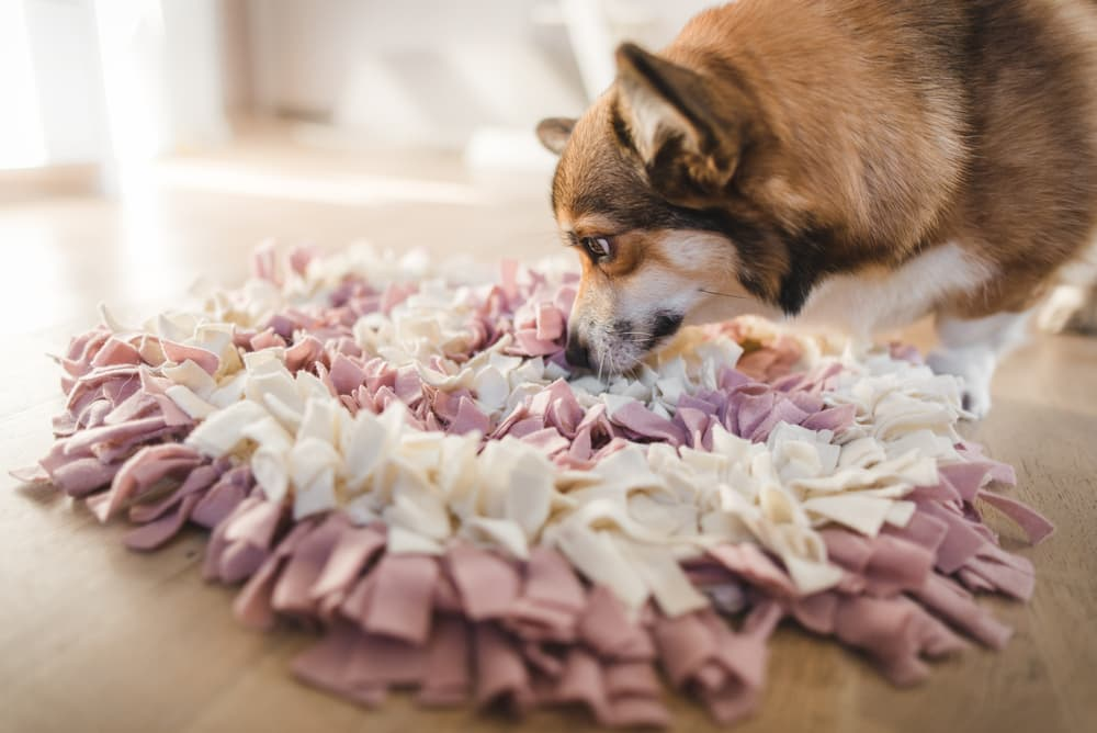Dog playing with snuffle mat