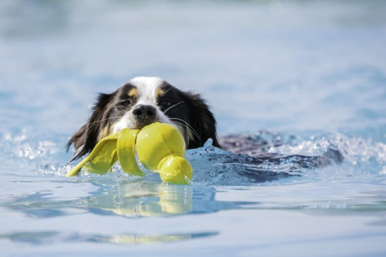 dog playing with water toy