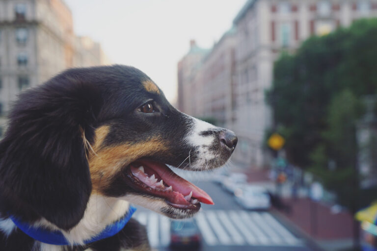 Rescue dog in NYC