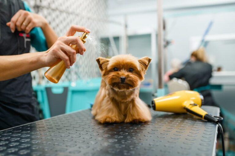 Dog getting sprayed with dry shampoo