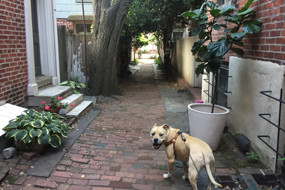 10 Dog Parks Philadelphia Residents Enjoy