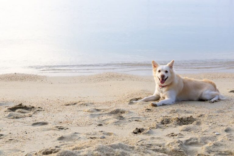 Dog lying in sand on beach