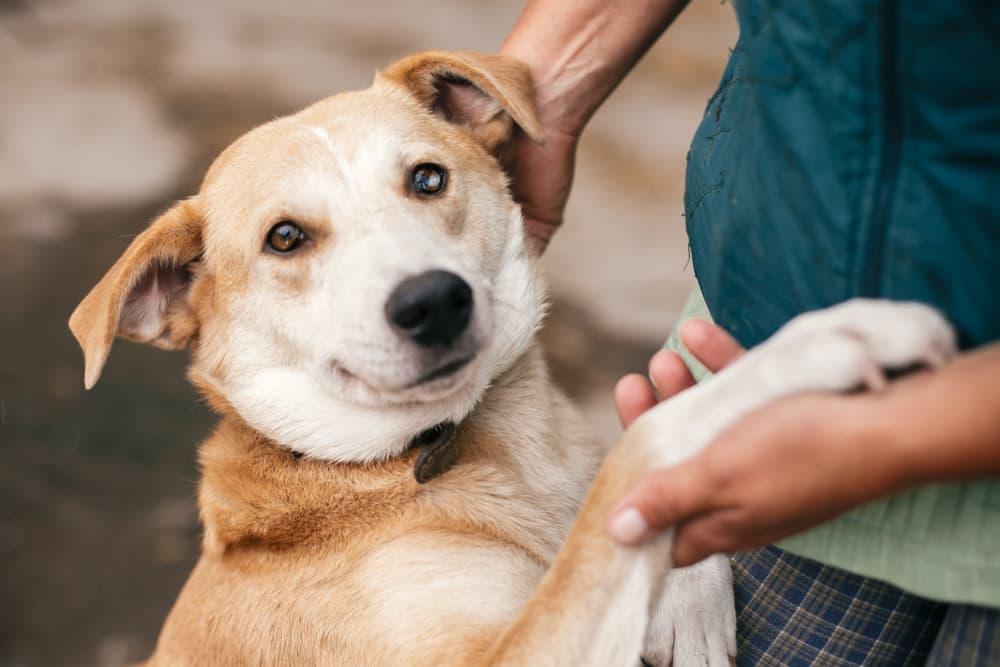 7 Amazing Dog Rescues in Washington D.C.