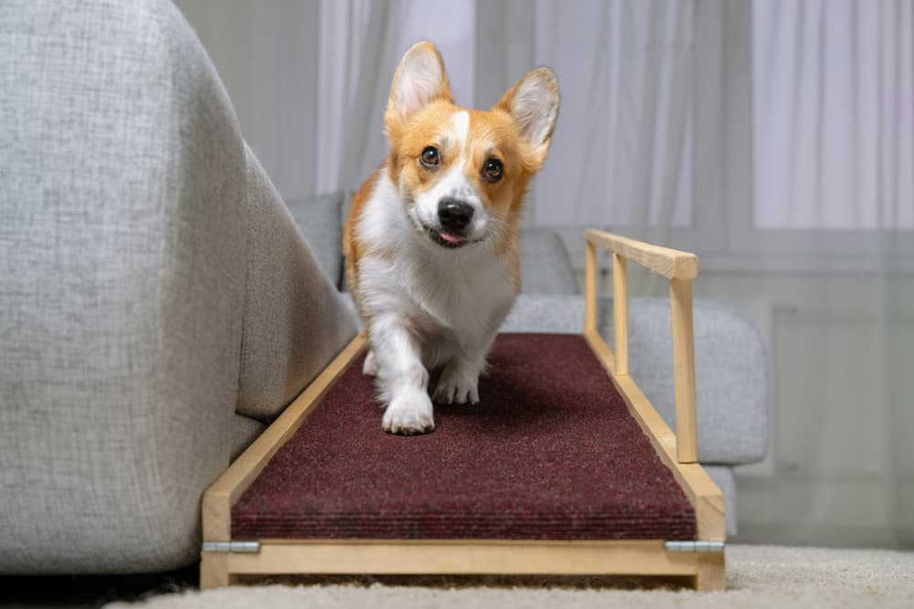 6 Best Dog Ramps for Safety and Ease